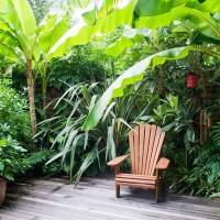 Thiết kế sân vườn nhiệt đới