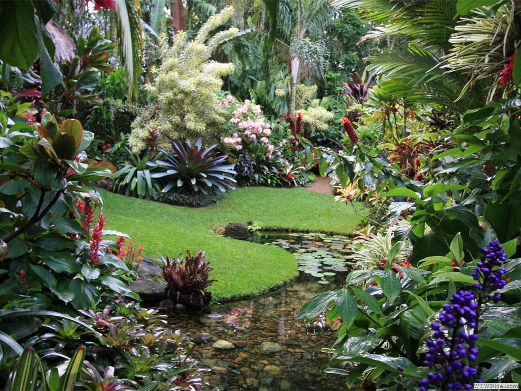 Một khu vườn nhiệt đới với hình dáng tự nhiên, mềm mại của địa hình.