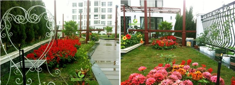 Vẻ đẹp rực rỡ của hoa xua tan giá lạnh mùa đông trên tầng cao thứ 30 của tòa nhà