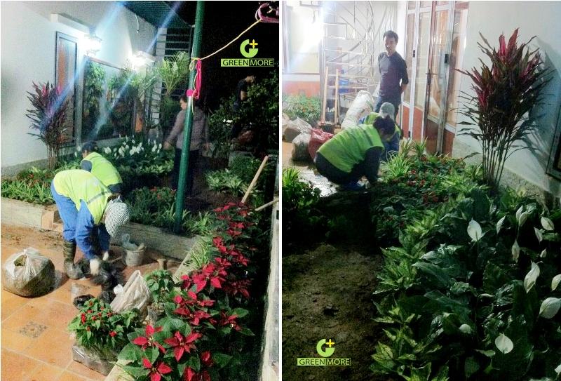 vuon Ninh Hiep - greenmore (4)
