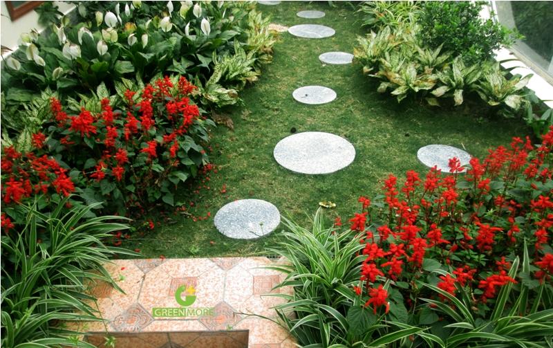 vuon Ninh Hiep - greenmore (7)