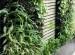 Thiết kế và thi công vườn đứng tòa nhà Mitalab
