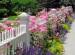Ý tưởng cho hàng rào trong sân vườn