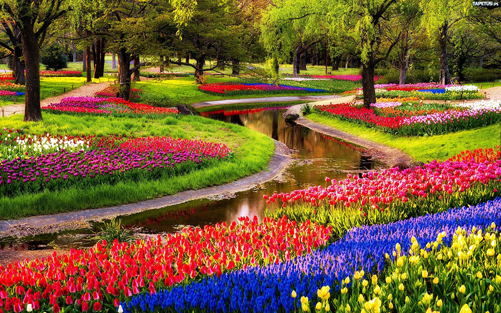Keukenhof Gardens Desktop Background