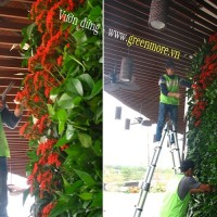 vuon-dung-lai-greenmore02