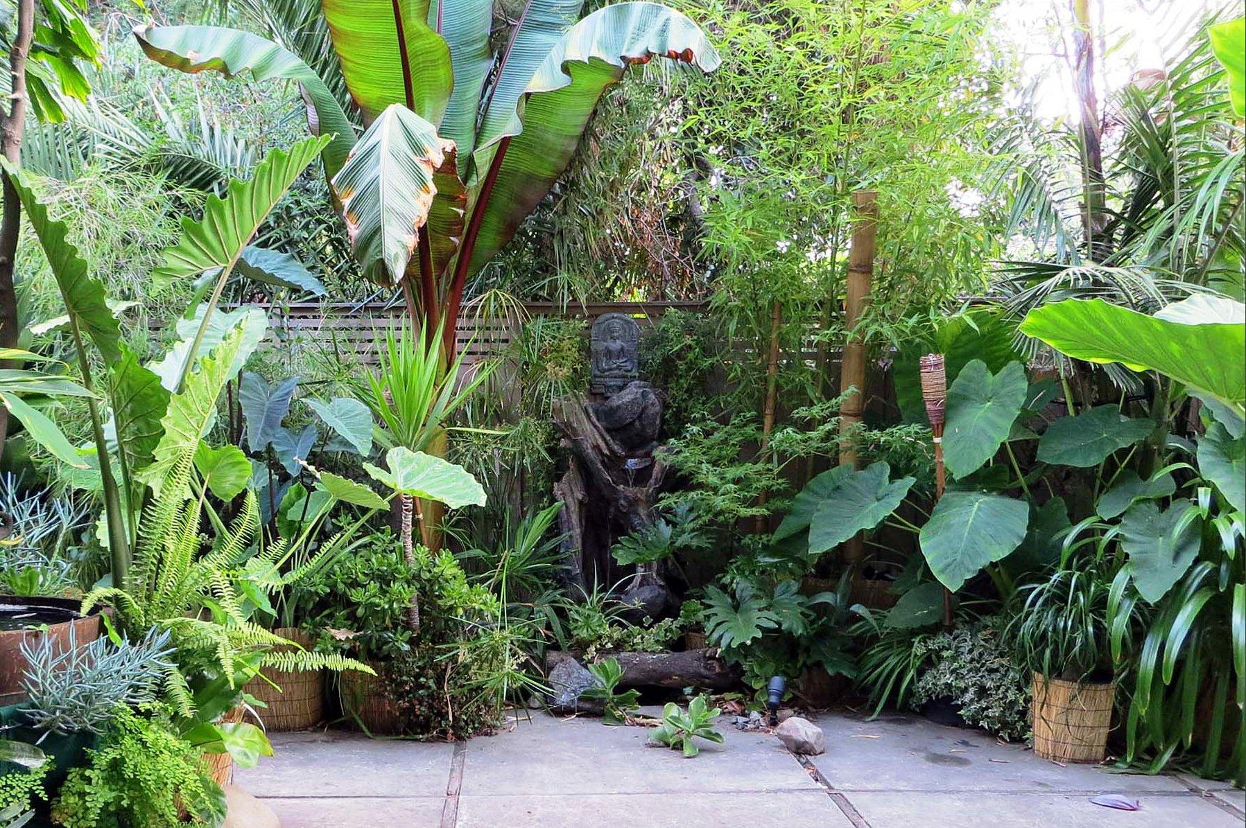 Cây lá rộng sẽ tăng cảm giác nhiệt đới -xanh mát cho khu vườn