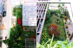 Thi công vườn trên mái – Cô Dung – TP Nam Định