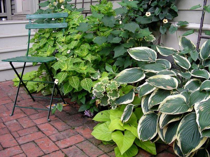 mistake garden - greenmore (6)