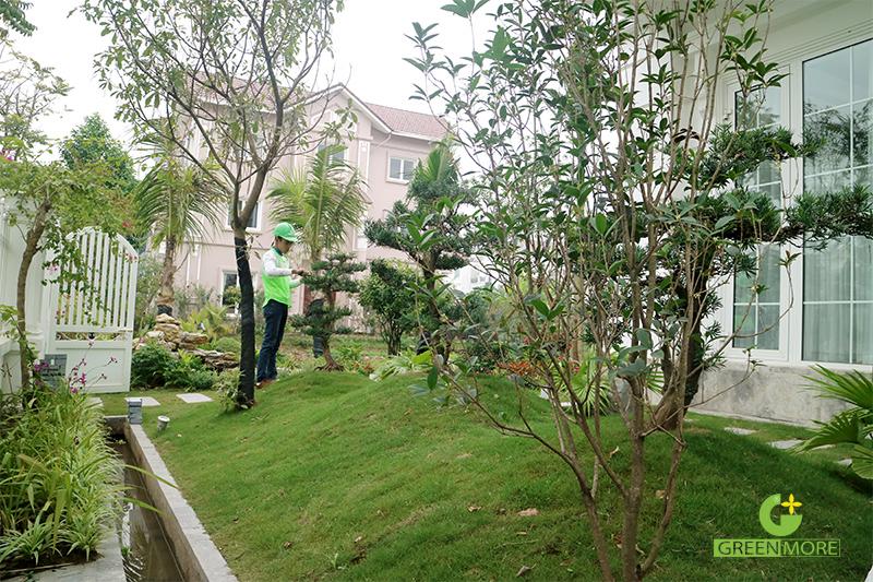 huong-dan-cham-soc-san-vuon-greenmore2