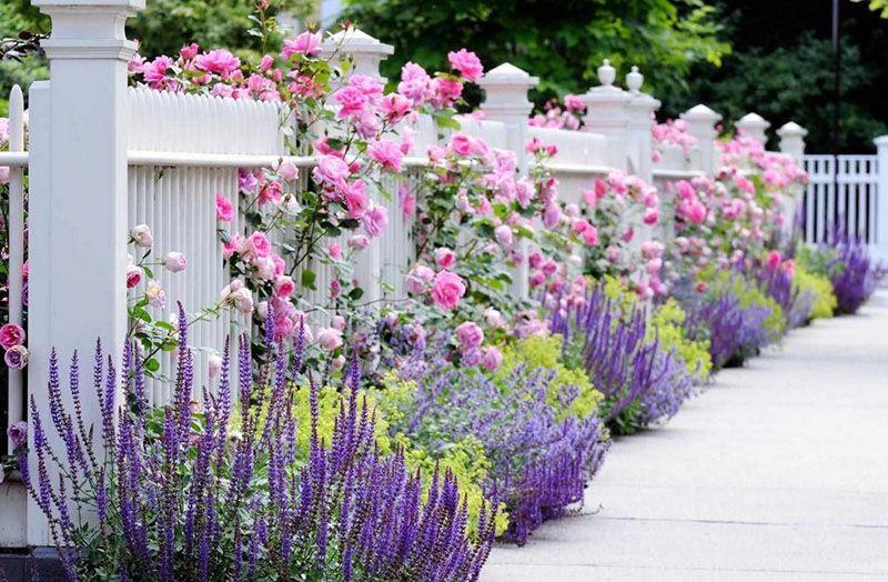 Một hàng rào đầy hoa sẽ làm ngôi nhà bạn nổi bật với phần còn lại của khu phố