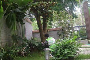 Chăm sóc sân vườn KĐT Gamuda sau 1 tháng thi công