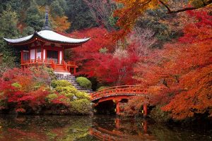 Trồng cây gì cho sân vườn phong cách Nhật Bản?