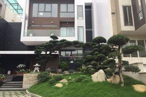 Tùng La Hán sân vườn – cây thế bạc tỉ của đại gia