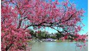 9 loại cây cho sân vườn tuyệt đẹp và quý hiếm tại Việt Nam